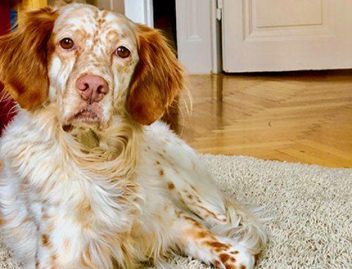 Ein Leben wie ein Hund – was wir von den Vierbeinern lernen können